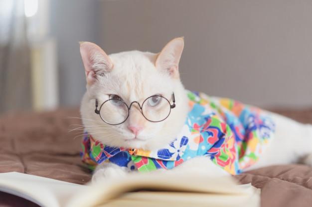 Кот в очках и с книгой