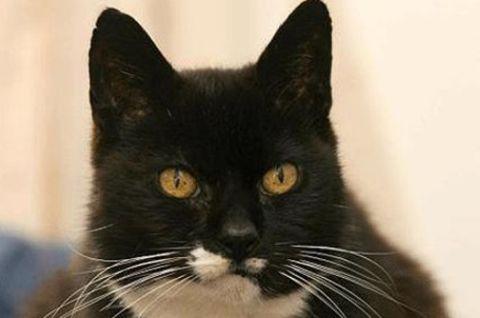 Сколько лет в одном году у кошек thumbnail